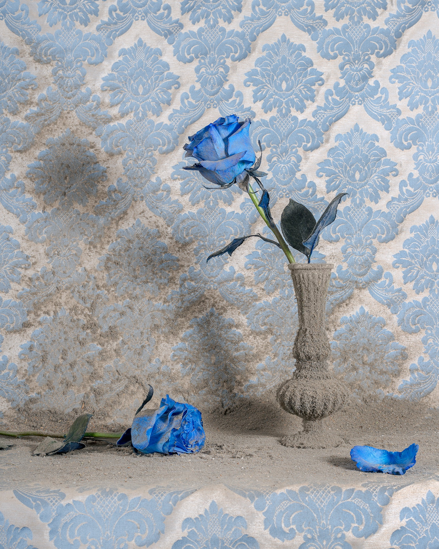 Blue Roses with Dust by Dylan Everett